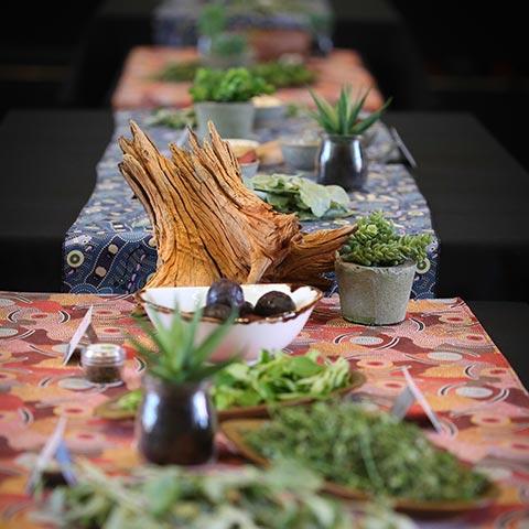 Uluru Feastival Masterclass Plants