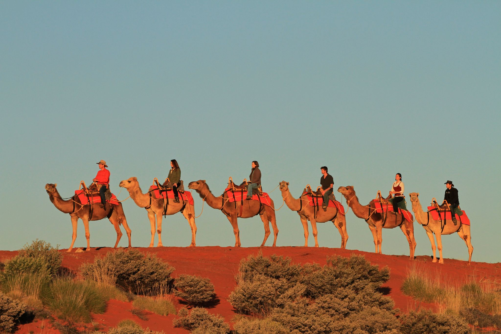 line of six camels and riders atop a sand dune in Australia