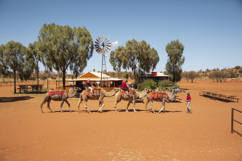 Guest riding camels